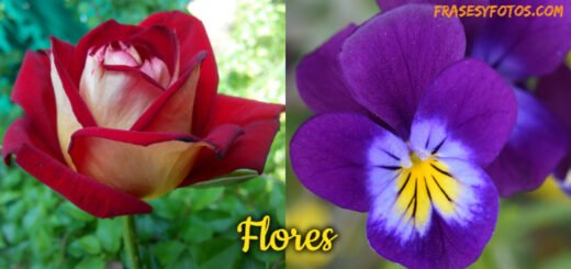Flores Frases